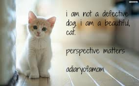 defective dog