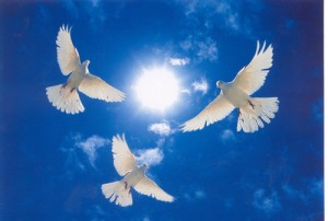 doves in a blue sky