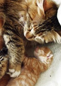 kitten[1]